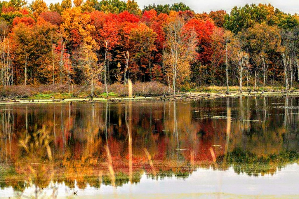Autumn colors reflecting on water at Potato Creek in North Liberty, Indiana
